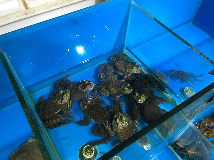 Bull frogs in the market